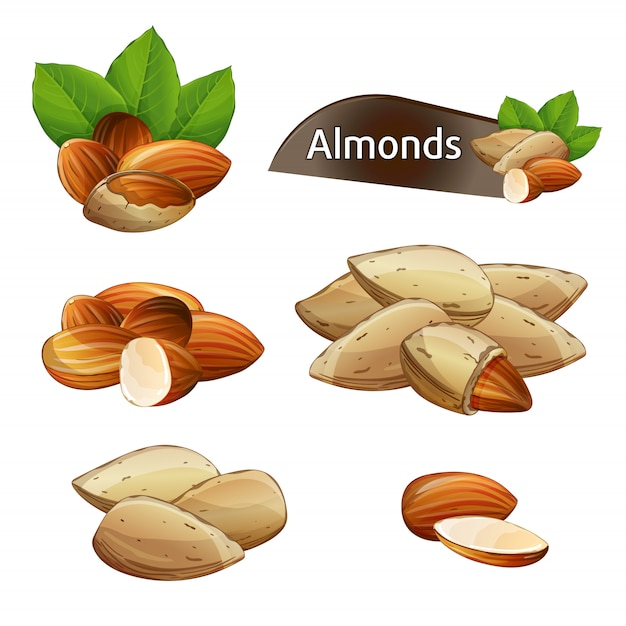 Almond kernel with green leaves set Premium Vector