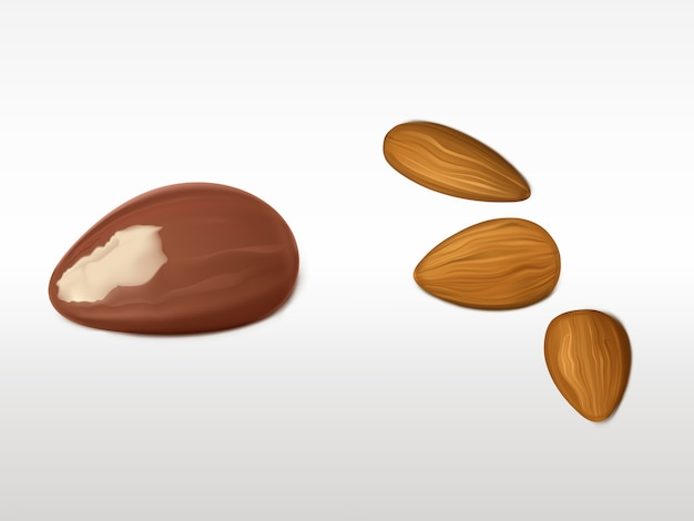 Almonds and brazilian nut set isolated on white background. Free Vector