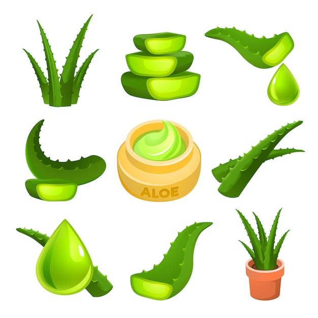 Aloe set, cartoon style Premium Vector