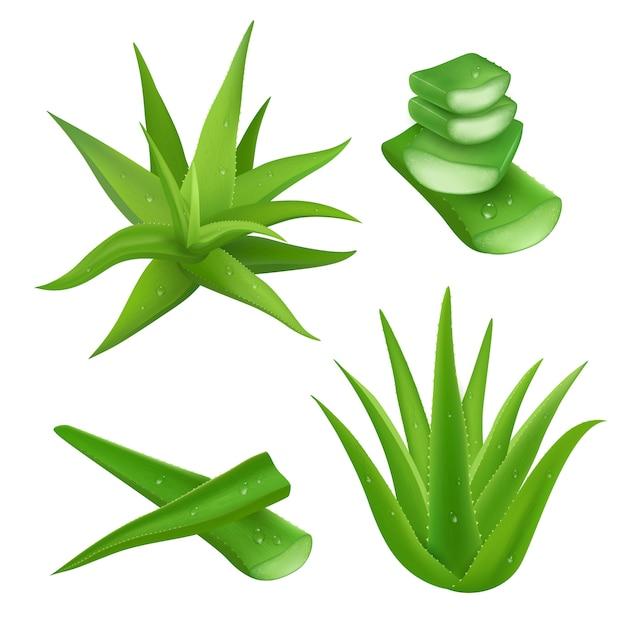 Aloe vera set Free Vector