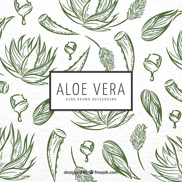 Aloe vera sketch background Premium Vector