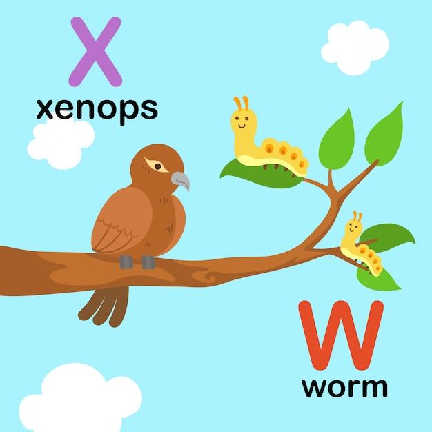 Alphabet letter w for worm, x for xenops, illustration Premium Vector