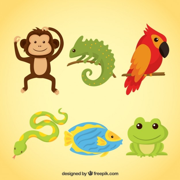 Amusing animals and reptiles