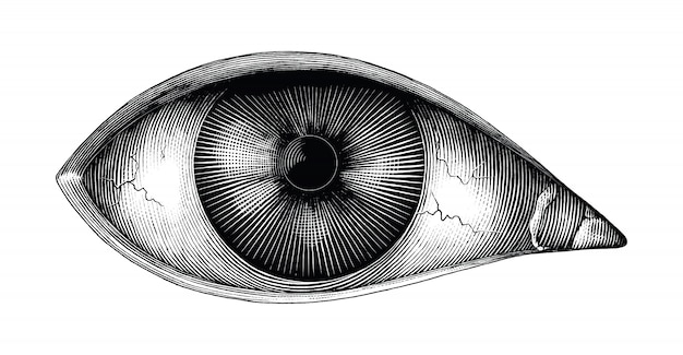 Anatomy of human eye hand draw vintage clip art isolated Premium Vector