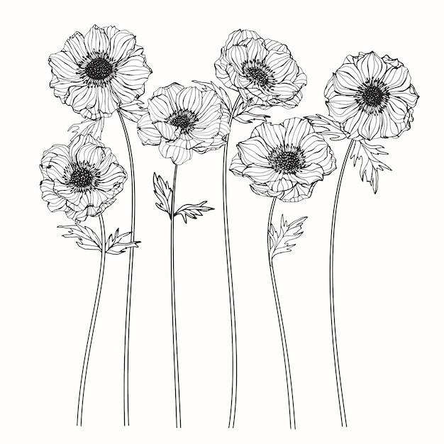 Anemone flower Premium Vector