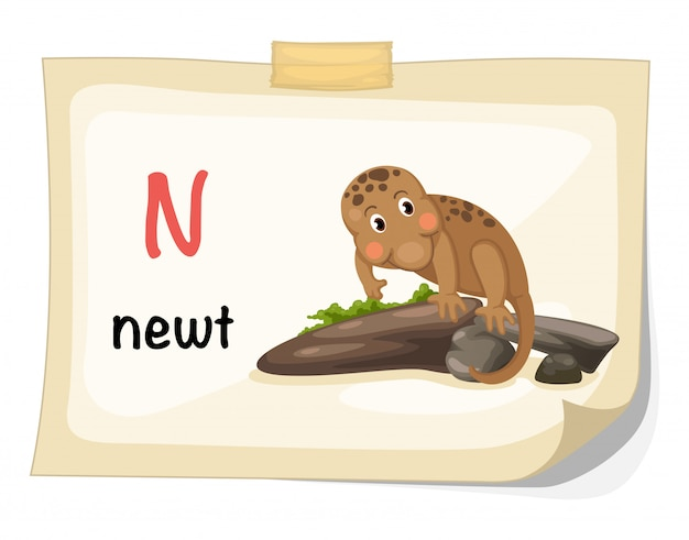 Animal alphabet letter n for newt illustration vector Premium Vector