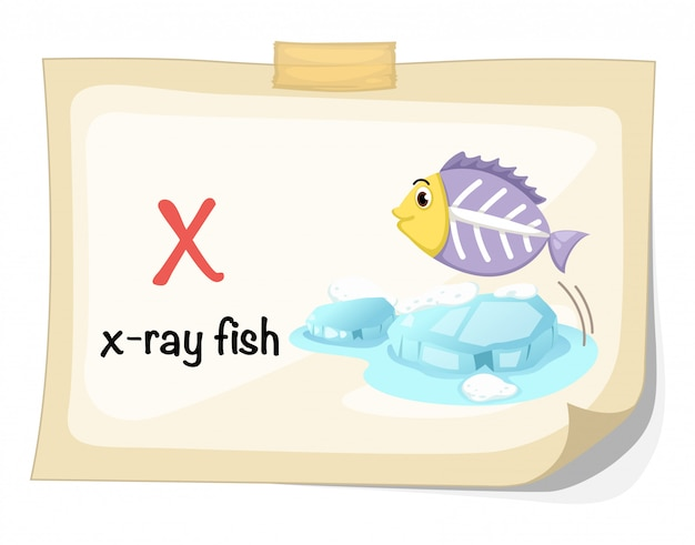 Animal alphabet letter x for x-ray fish illustration vector Premium Vector