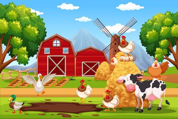Animal at the farm Premium Vector