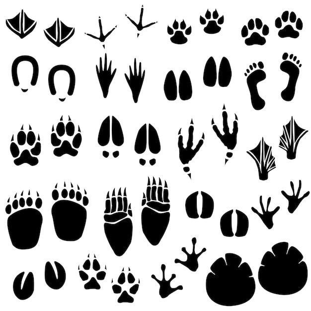 動物の足跡トラックベクトル。ベクトルの動物の足跡のセット。 Premiumベクター