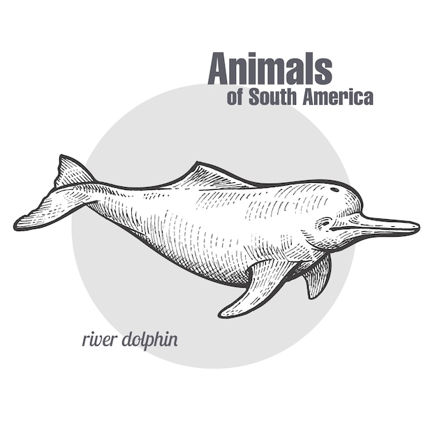 Animal of south america river dolphin. Premium Vector