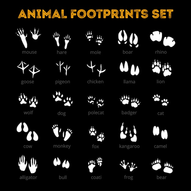 Animal track black background Free Vector
