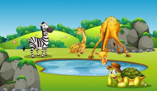 Animals around pond scene Free Vector