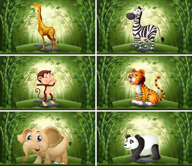 Animals in bamboo scene Free Vector