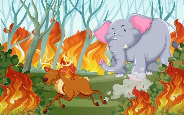 Animals run away from wildfire Premium Vector