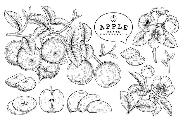 リンゴの果実の絵 Premiumベクター