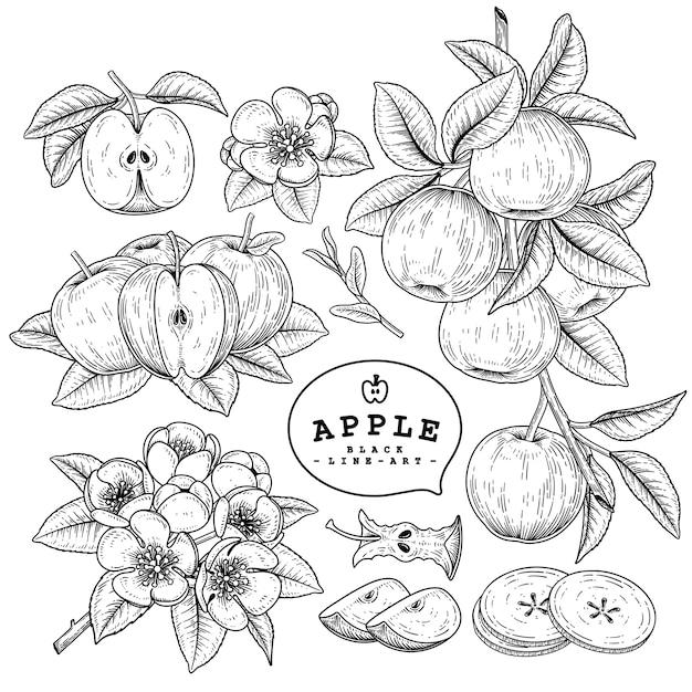 白で隔離されるアップル手描き植物 Premiumベクター
