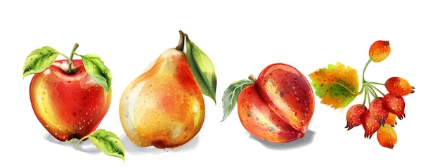 Apple, pear and peach watercolor set. colorful fruits detailed painted style Premium Vector