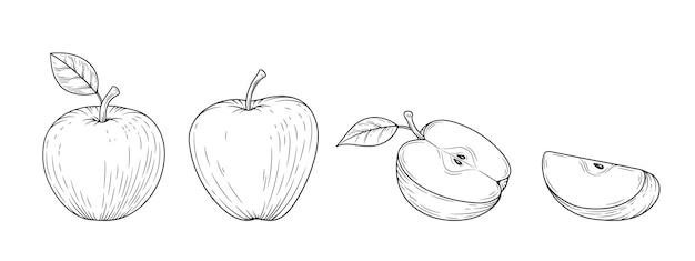アップルは、白い背景で隔離の刻まれたヴィンテージイラストを設定します。有機食品手描きスケッチ。黒のアウトライン。 Premiumベクター