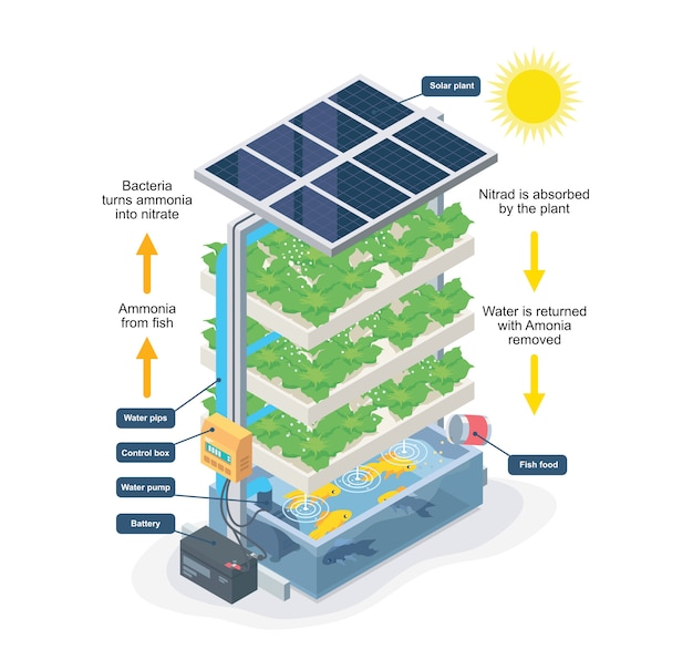 Aquaponic system smart farming isometric Premium Vector