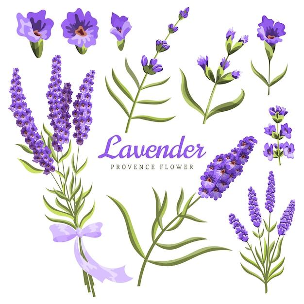ラベンダー。水彩のラベンダーの花と白のシンボルのセットaquarelle。 Premiumベクター
