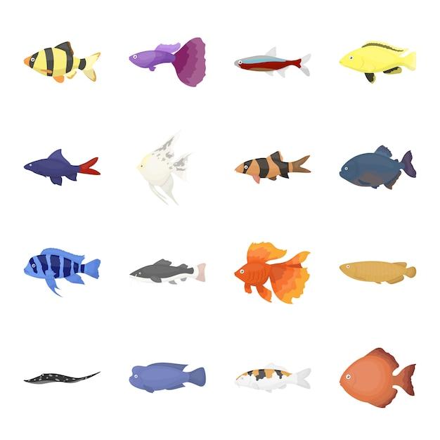 Aquarium fish cartoon vector icon set. vector illustration of underwater aquarium fish . Premium Vector