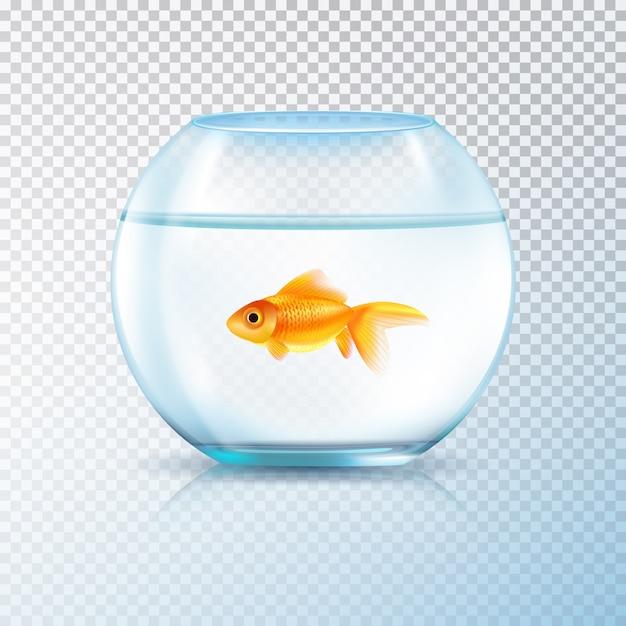 Aquarium with single golden fish Free Vector