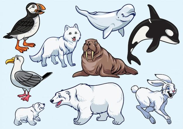 Arctic animal set Premium Vector