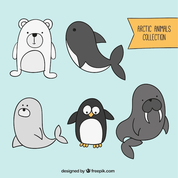 Arctic animals collection Free Vector
