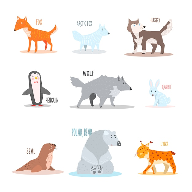 Arctic and antarctic animals, penguin. illustration Premium Vector