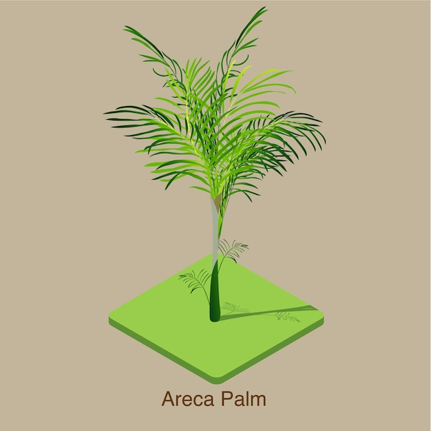 Areca palm isometric 3d vector art. Premium Vector