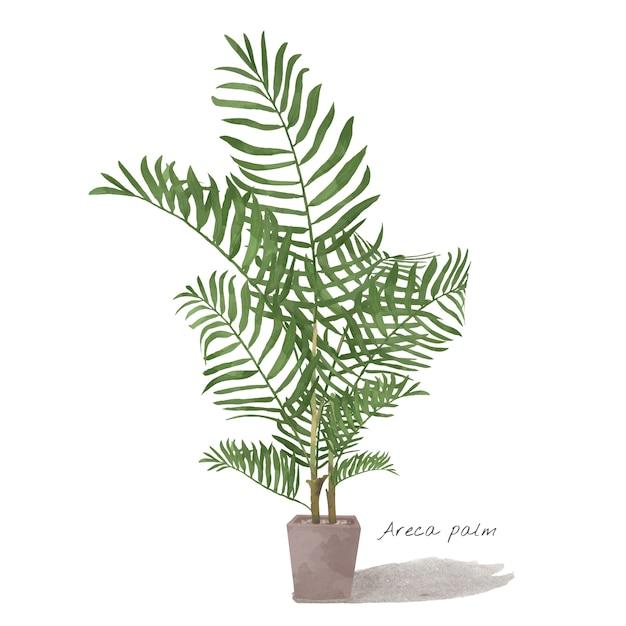 Areca palm leaf isolated on white background Free Vector
