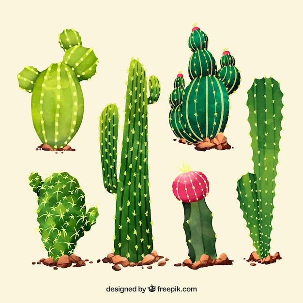 Artistc pack of watercolor cactus Free Vector