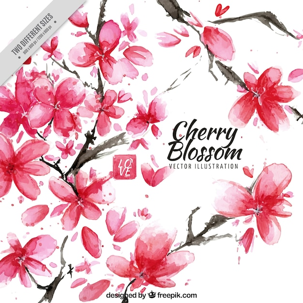 Artistic background of watercolor cherry blossoms Free Vector