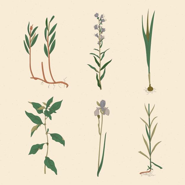 Disegno artistico di erbe e fiori selvatici Vettore gratuito