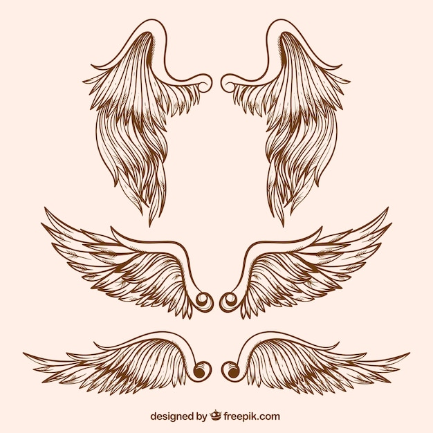 Assortment of great wings in realistic design Free Vector