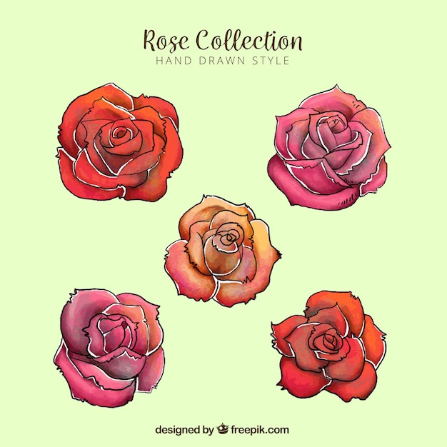 Assortment of five colored roses in hand-drawn\ style