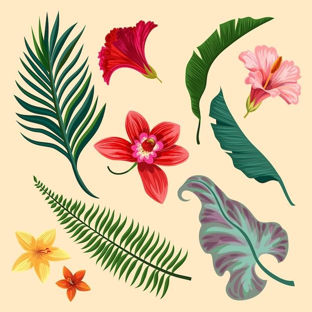 熱帯の花と葉の品揃え 無料ベクター