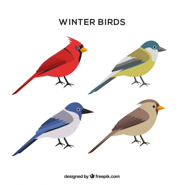 Assortment of winter birds in flat design Free Vector