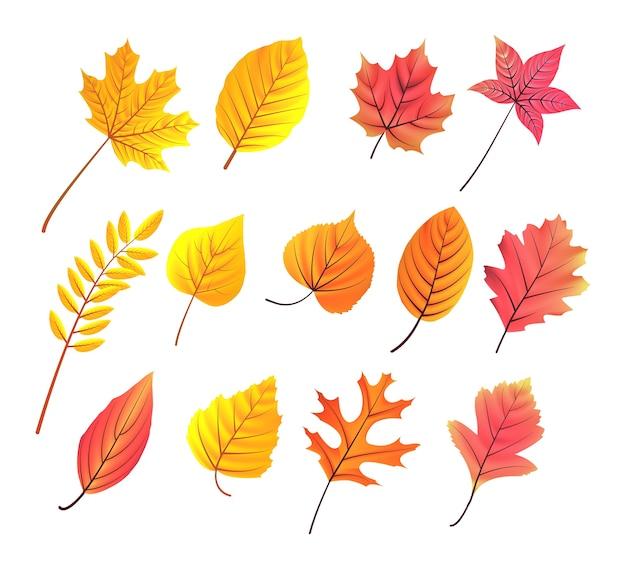 가을 잎 수집 프리미엄 벡터