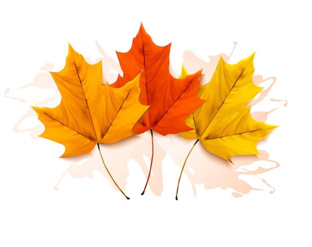 Осенний фон с тремя красочными листьями. Premium векторы