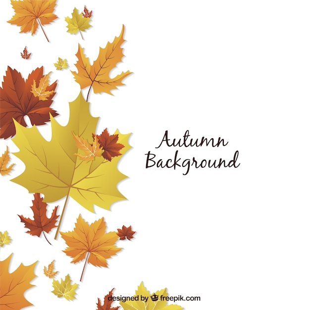 Autumn background with decorative dried flowers Free Vector