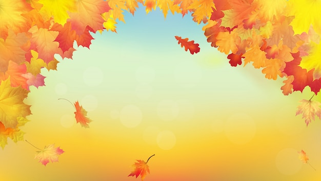 Autumn background with golden maple and oak leaves Premium Vector
