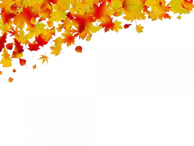 紅葉の秋のカード。 Premiumベクター