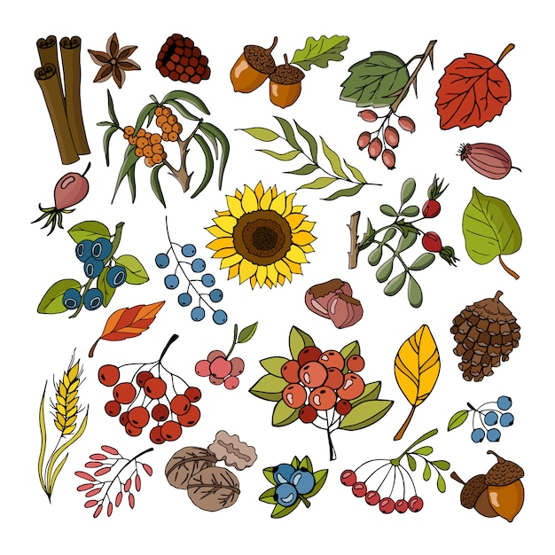 Autumn Collection Of Plants And Flowers Premium Vector