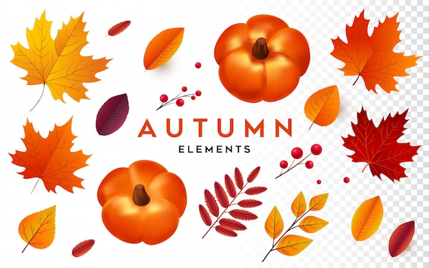 Autumn element collection Premium Vector