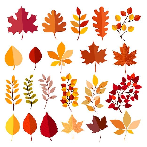 Autumn elements collection Premium Vector