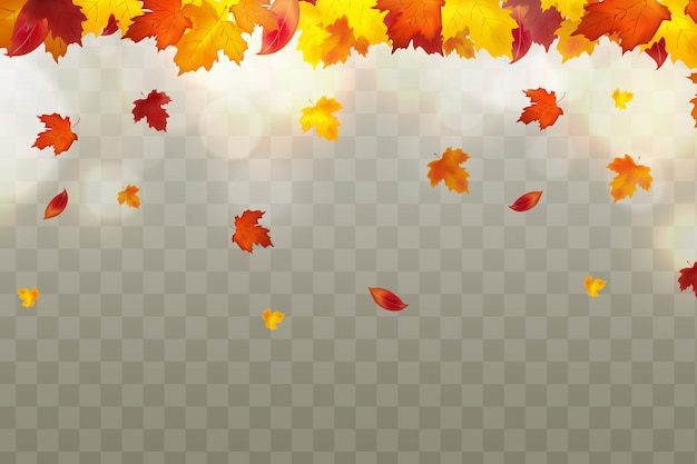 Premium Vector Autumn Falling Red Yellow Orange Brown Leaves On Transparent Background Autumnal Foliage Fall Of Maple Leaves