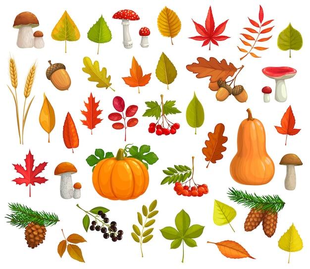 Осенние иконы мультфильм падающие листья, тыква, грибы, шишки. клен, дуб или тополь и береза с листьями каштана и рябины. падение сезонных спелых ягод, колосьев пшеницы и осенней листвы. Premium векторы