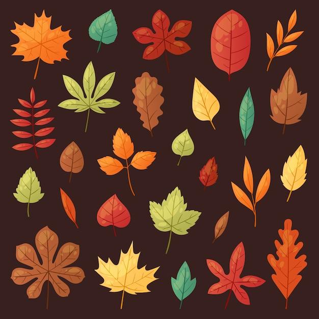 Осенний лист осенние листья падают с поваленных деревьев покрыты листвой дуба и листвы клена или листвы листвы иллюстрации падения листвы установить с листвой, изолированных на фоне Premium векторы