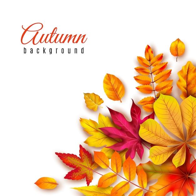 Осенние листья фон. осенняя кайма с желтой листвой клена, дуба и рябины. осенняя тема баннер сезоны абстрактные краски искусство шаблон Premium векторы